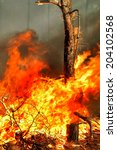 Small photo of Tree ablaze with forest fires