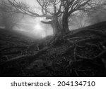 monochrome forest landscape   Shutterstock . vector #204134710