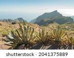 Tenerife  Spain  July 28th 2015 ...