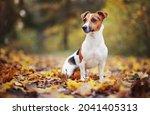 small jack russell terrier... | Shutterstock . vector #2041405313