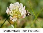 Bumble Bee Peeking Around...