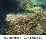 Various Coral Reef With Fishes