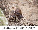 Small Cute Playful Baby With...
