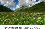 Alpine Meadow In Caucasus In...