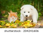 Stock photo samoyed puppy with little red kitten outdoors 204241606