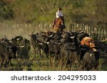 Cowboy Gathering Texas Longhorn