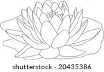 vector   contour waterlilly...