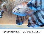 Fish Inside Water Tank At...