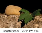 Grapes Leaf And Round Pebble...