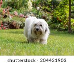 Cute White Dog With Long Hair ...