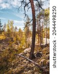 Golden Autumn In Karelia....