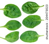fresh green baby spinach leaves ... | Shutterstock . vector #204473023