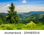 big tree in front of coniferous forest on top of a slope of mountain range - stock photo