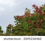 Autumn Garden  Viburnum Bush...