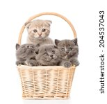 Group Kittens In Basket Lookin...