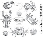 crustacean vector illustrations | Shutterstock .eps vector #204550126