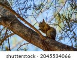 Squirrel On The Tree In The...