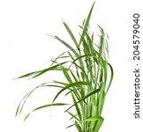 bunch of green grass isolated... | Shutterstock . vector #204579040