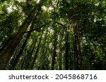 Green Dark Forest Nature...
