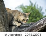 Stock photo small cat hunters house pets hunt rodents and small animals in the house 204612076
