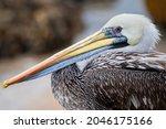 A Closeup Shot Of A Pelican On...
