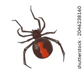 hand drawn red backed spider | Shutterstock .eps vector #2046238160