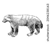 hand drawn wolverine on white... | Shutterstock .eps vector #2046238163