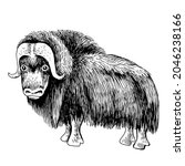 standing musk ox isolated on... | Shutterstock .eps vector #2046238166