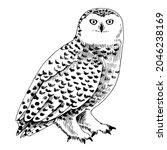 white polar owl   rather large... | Shutterstock .eps vector #2046238169