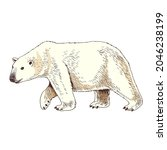 white arctic polar bear hand... | Shutterstock .eps vector #2046238199