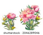 pink peony compositions for...   Shutterstock . vector #2046289046