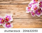 orchids bloom. white with pink... | Shutterstock . vector #204632050