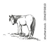 sketch of horse with long mane...   Shutterstock .eps vector #2046593810