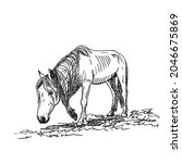 sketch of hungry horse with...   Shutterstock .eps vector #2046675869