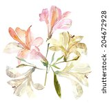 lily  | Shutterstock . vector #204672928