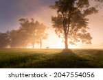 Misty Morning In Meadow With...