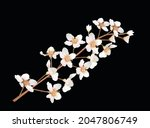 illustration with spring tree... | Shutterstock .eps vector #2047806749