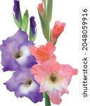 illustration with gladiolus... | Shutterstock .eps vector #2048059916