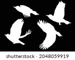 illustration with woodpecker... | Shutterstock .eps vector #2048059919