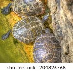 Three Turtles In A Pond In Hdr