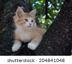 Kitten Sitting In A Tree Close...