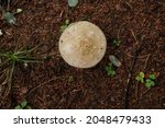 Toadstools On The Green Lawn In ...