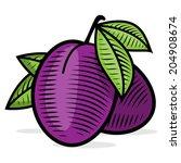 plum color engraving. vintage... | Shutterstock .eps vector #204908674
