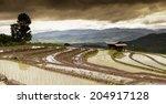 rice fields on terraced. | Shutterstock . vector #204917128