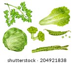 green vegetable organic food... | Shutterstock . vector #204921838