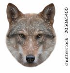 piercing look of a wolf ... | Shutterstock .eps vector #205065400