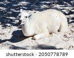 llama. mammal and mammals. land ...   Shutterstock . vector #2050778789