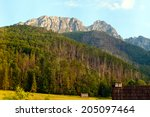 forest in tatra mountains.... | Shutterstock . vector #205097464