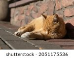 Red Cat On The Street Basking...