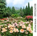 Stock photo rose garden 205126558